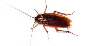 insetti infestanti